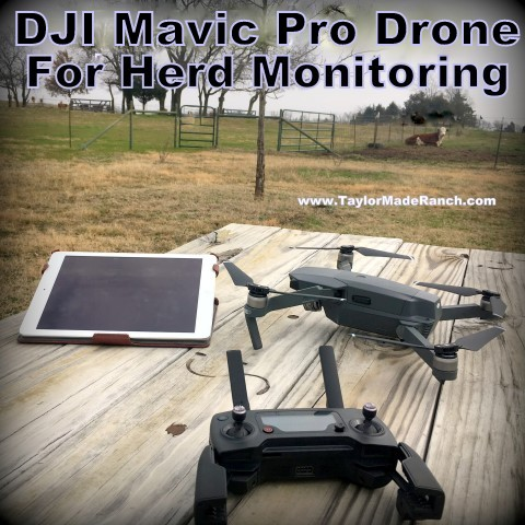 Why not use modern technology to aid you & help efficiency in monitoring your herd? We use a drone that's proven invaluable in certain circumstances! #TaylorMadeRanch