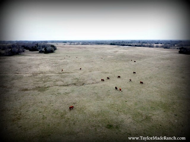Using DJI Mavic Pro drone to check remote pastures #TaylorMadeRanch